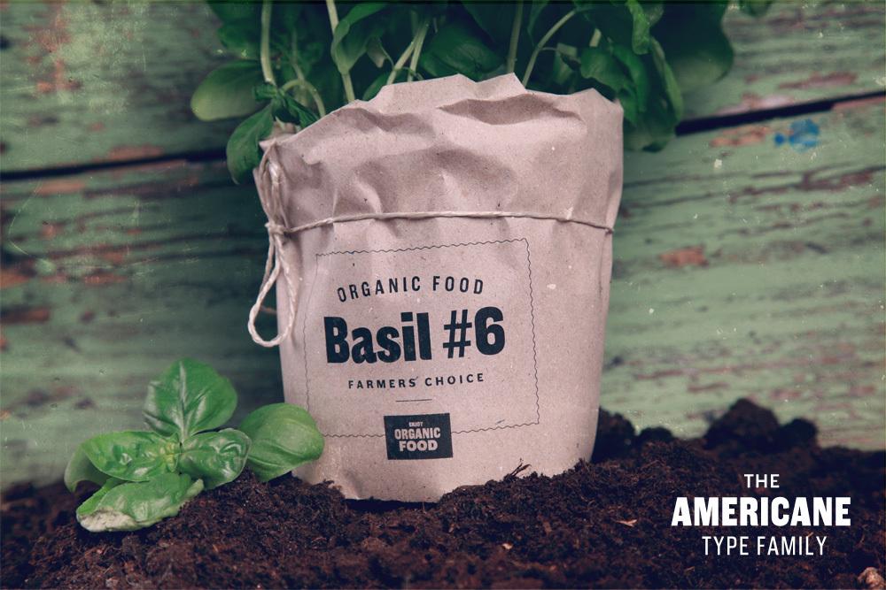 Americane Basil
